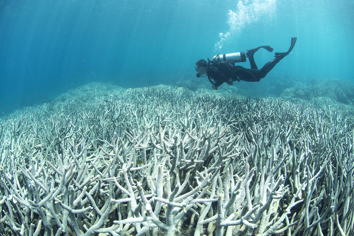 Coral bleaching near Heron Island, Australia in February 2016. Photo: XL Catlin Seaview Survey