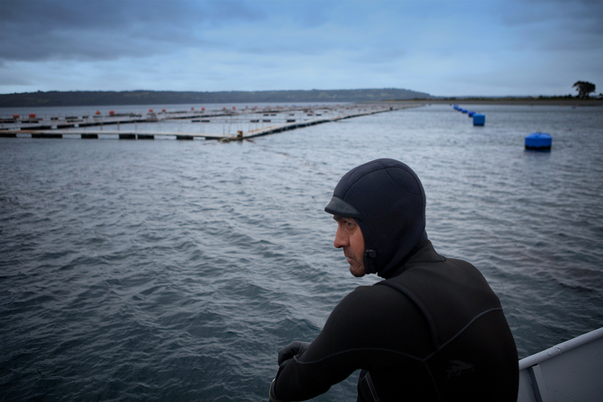 Ramon Navarro at a salmon farm in southern Chile. Photo: Daniel Casado